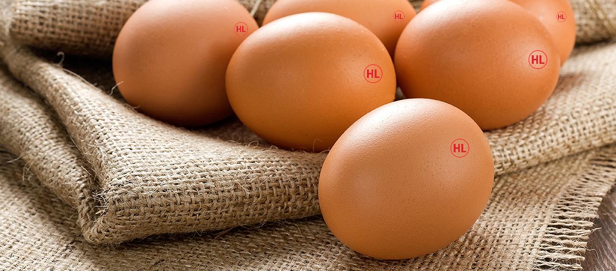 Cung cấp trứng gà tại TP. HCM