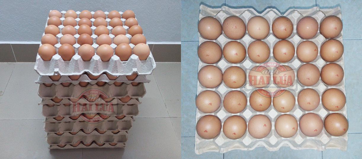 giá trứng gà công nghiệp